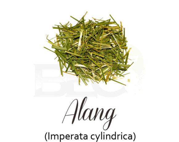 Alang – alang ( Cogon Grass )