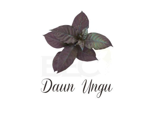 Ungu Leaves ( Caricature Plant )