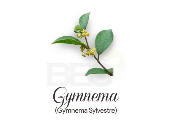 Gymnema ( Gymnema Leaves )