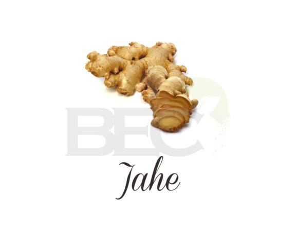 Jahe ( Ginger )