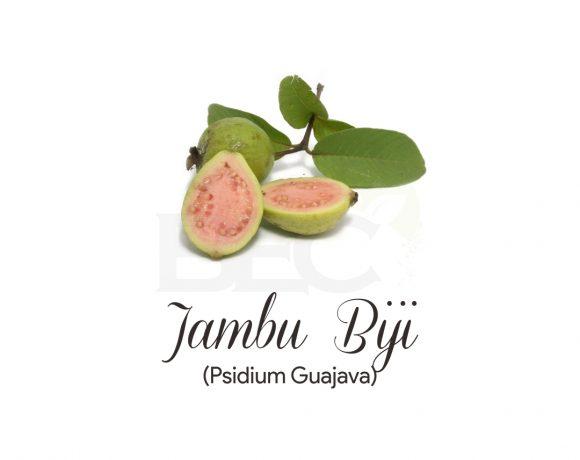 Jambu Biji ( Guava Leaves )