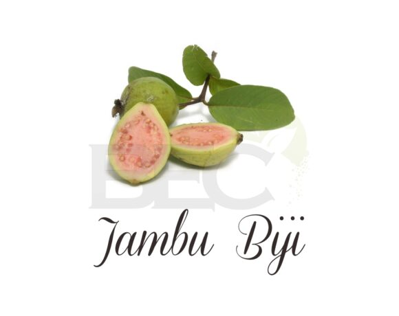 Jambu Biji ( Guava Leaves )