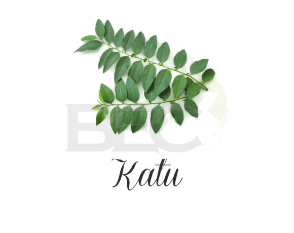 Katu ( Sweet Leaf Bush )