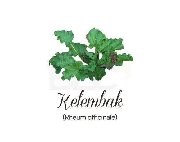 Kelembak ( Rhubarb )
