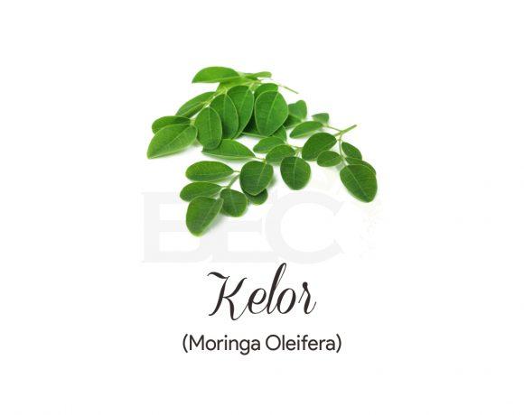 Kelor ( Moringa )