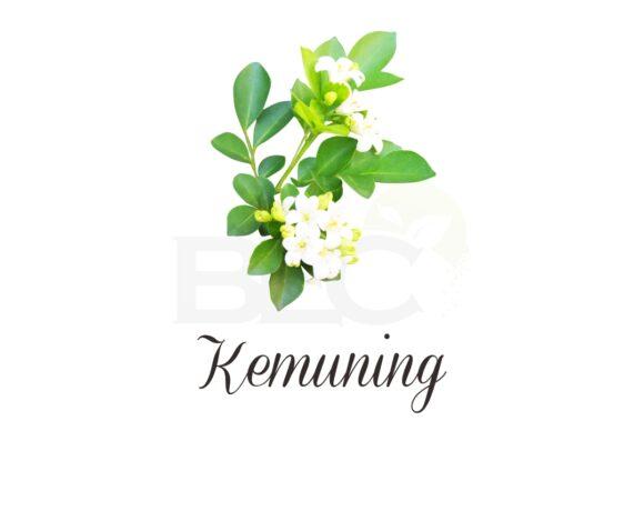 Kemuning ( Orange Jasmine )
