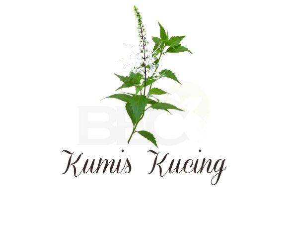 Kumis Kucing ( Java Tea )