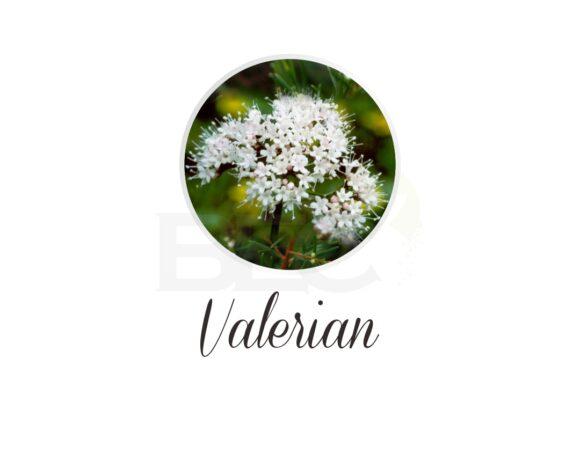 Valerian ( Valerian )